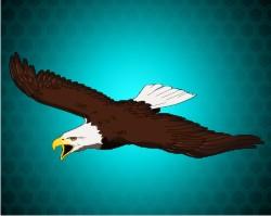 Eagle Medals!!
